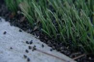 crumb rubber turf