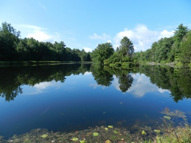 reflective pond (2)